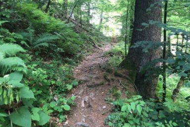 Gozdna ucna pot Ursank (1)