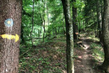 Gozdna ucna pot Ursank (11)
