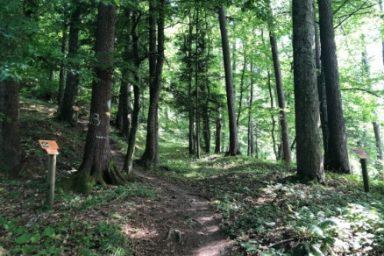 Gozdna ucna pot Ursank (12)