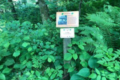 Gozdna ucna pot Ursank (3)