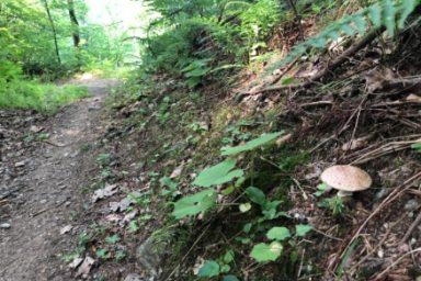 Gozdna ucna pot Ursank (6)