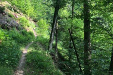 Gozdna ucna pot Ursank (7)