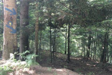 Gozdna ucna pot Ursank (8)