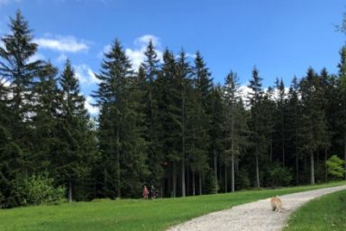 Pohorje – Areh (6)