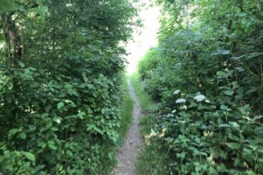 Sprehajalna pot Pod goroj (4)