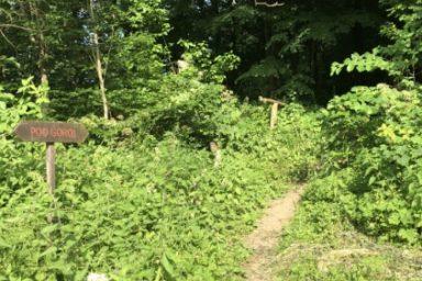Sprehajalna pot Pod goroj (5)